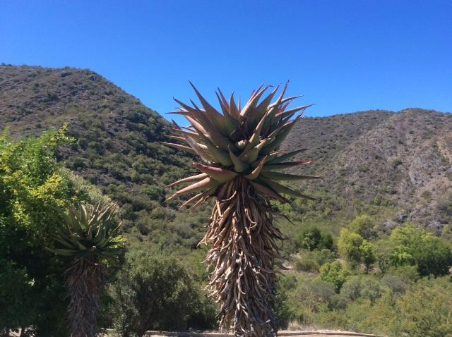 palmboom natuur afrika
