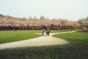 Kersenbloesempark Amstelveen